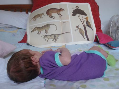 A leitora Cecília Mantovani Villas-Bôas, em 29 de outubro de 2008, com 1 mês e três dias.